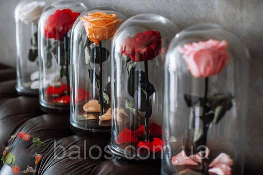 Живая вечная роза в стеклянной колбе 1