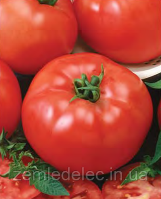 Семена томата Баллада 1000 семян Nasko