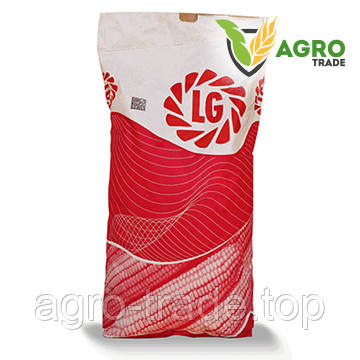 Семена кукурузы, Limagrain, JODIE, ФАО 380
