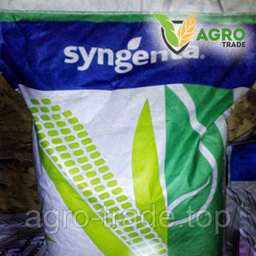 Семена кукурузы, Syngenta, НК Канзас, ФАО 290