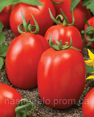 Семена томата Надежда 1000 семян Nasko