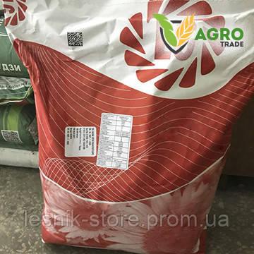Семена подсолнечника, Лимагрейн, ЛГ 5662