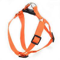Шлея для животных Лорик 2,0 оранжевый