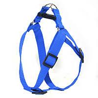 Шлея для животных Лорик 2,0 синий