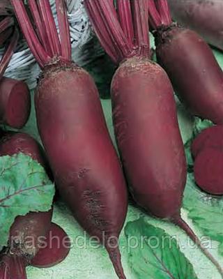 Семена свеклы Торпедо 5000 семян Nasko