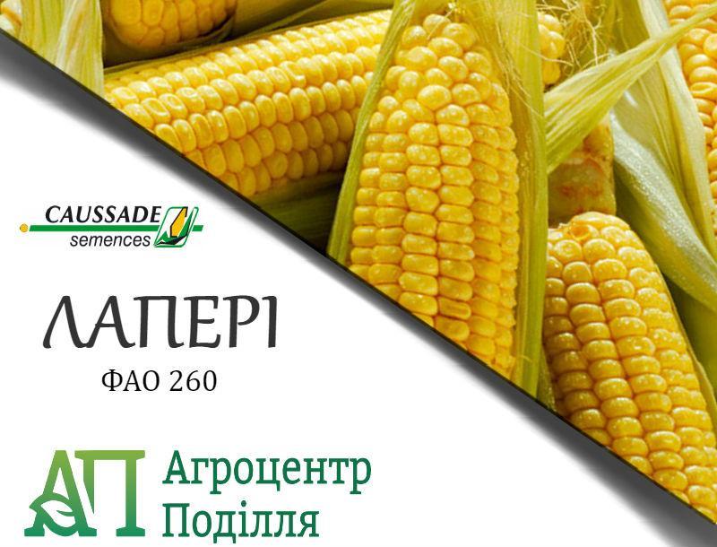 Семена кукурузы ЛАПЕРИ (ФАО 260) Коссад Семанс