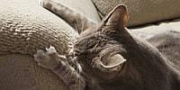 Почему кошка все Царапает?