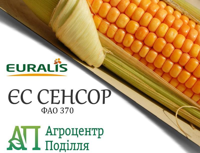 Семена кукурузы ЕС СЕНСОР (ФАО 370)