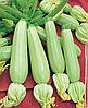 Семена кабачка Садко F1 4 кг. Nasko