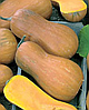Семена тыквы Новинка 4 кг. Nasko