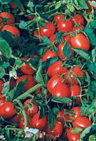 Семена томата Астерикс F1 (драже)25 000 сем. Сингента.