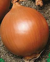 Семена лука Халиф 1000 семян Nasko
