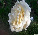 Светильник цветок роза бра люстра на жестком креплении, фото 4