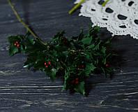 Ветка остролиста рождественского , фото 1