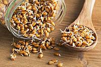 Отх 1-2 кат пшеницы яровой вес.