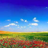 Фотопечать на рулонных шторах и жалюзи производство в Одессе и в Украине под заказ приглашаем дилеров