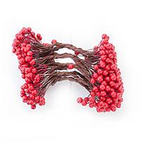 Калина лакированная красная, соцветие из 50 ягод, диаметр ягоды 8 мм