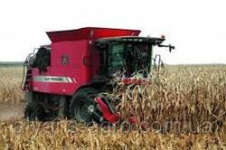 У центральних регіонах України спостерігалося надмірне зволоження зернових