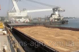 Украина экспортировала 62% ячменя в Саудовскую Аравию