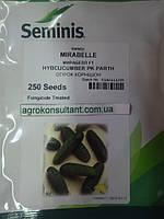 Семена огурца Мирабелл F1, 250 семян — ультраранний гибрид (40-45 дней)