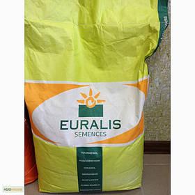 ЕС Сенсор, ФАО 370, семена кукурузы Euralis (Евралис)