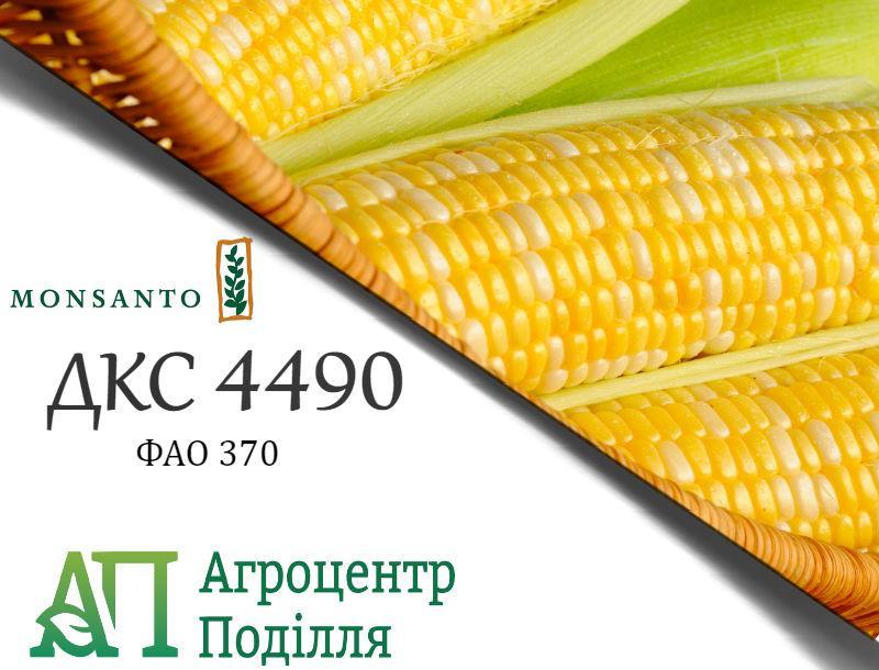 Семена кукурузы ДКС 4490 / DKС 4490 ФАО 370