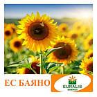 Баяно (Евралис) Семена Подсолнечника, фото 2