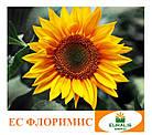Флоримис (под Евролайтинг) Семена Подсолнечника, фото 2
