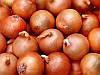 Халцедон насіння цибулі ріпчастої Semenaoptom 250 г