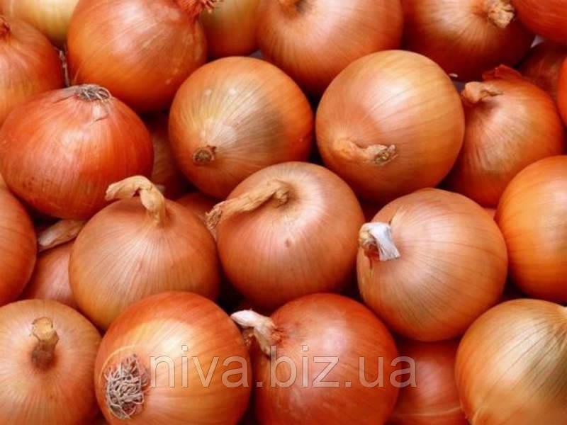 Халцедон насіння цибулі ріпчастої Semenaoptom 50 г