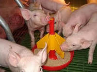 Все для Свиноводства