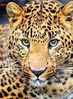 Алмазная вышивка, леопард 20х30 см, квадратные стразы, полная выкладка