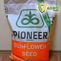 Семена подсолнечника, Pioneer, P64LE99 под гранстар