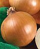 Семена лука Форум 500 семян Nasko