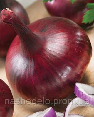 Семена лука Крымский сладкий 2500 семян Nasko