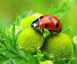 Средства защиты растений. ИНСЕКТИЦИДЫ,ПРОТРАВИТЕЛИ.