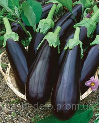 Семена баклажана Отелло F1 500 грамм Nasko