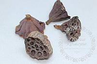 Сушеные натуральные коробочки лотоса
