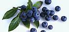 Варення з чорниці Zuegg Mirtilli Neri 50% змісту фруктів, 320 р., фото 3