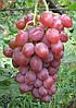 Виноград Невеста