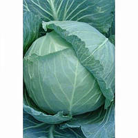 Гелиос F1 - капуста белокочанная, 10 000 семян, Moravo Seed