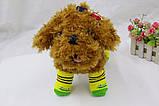 В'язані шкарпетки для собак дрібних порід, кішок, фото 3