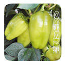 Семена перца сладкого Дорин F1 100 семян Nasko