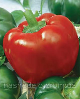 Семена перца сладкого Скиф 1000 семян Nasko