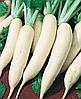 Семена редьки Гуливер 100 грамм Nasko