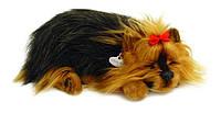 Дышащий щенок Йоркшир-терьер