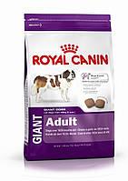 Royal Canin (Роял Канин) Giant Adult Сухой корм для взрослых собак гигантских пород весом от 45 кг и выше
