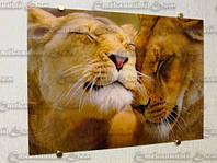 """Стеклянная картина """"Львы"""".Фотопечать"""