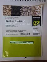 Огурец партенокарпический БЙОРН F1, 500 семян