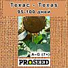 Семена подсолнечника Техас (Texas) - классический 7+ (США), фото 2
